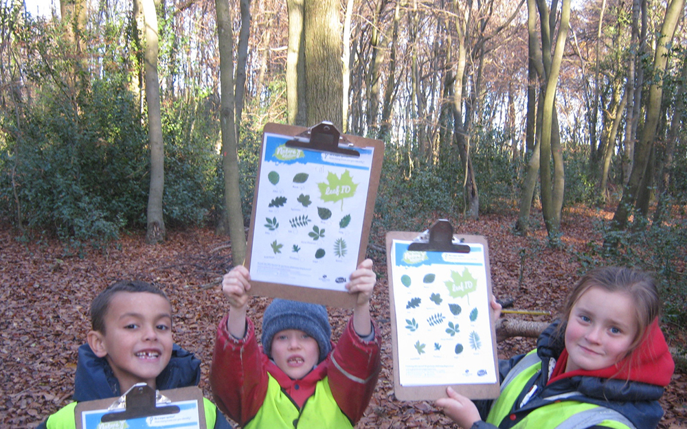 Forest Activities 4